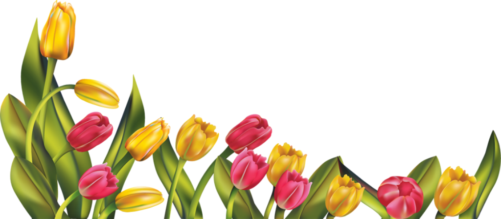 clip art royalty free stock Pictures images graphics page. Tulip border clipart