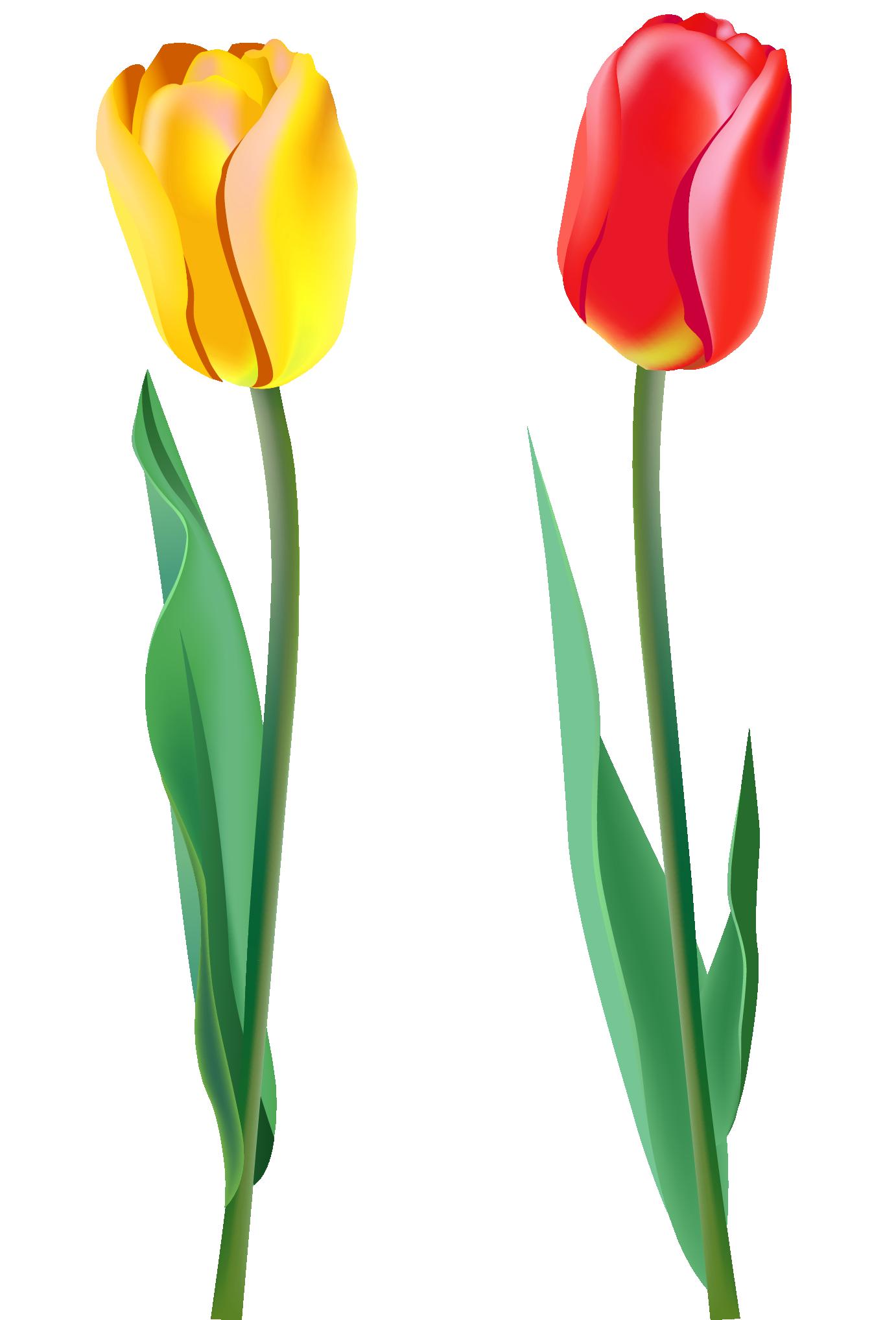 image transparent library Png image flowers pinterest. Tulip border clipart