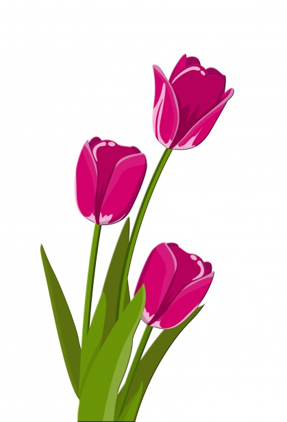 picture royalty free library Illustration free stock photo. Tulips clipart.
