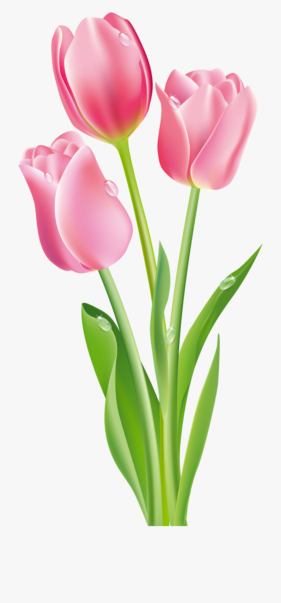 banner black and white Tulip canvas picture walls. Tulips clipart.