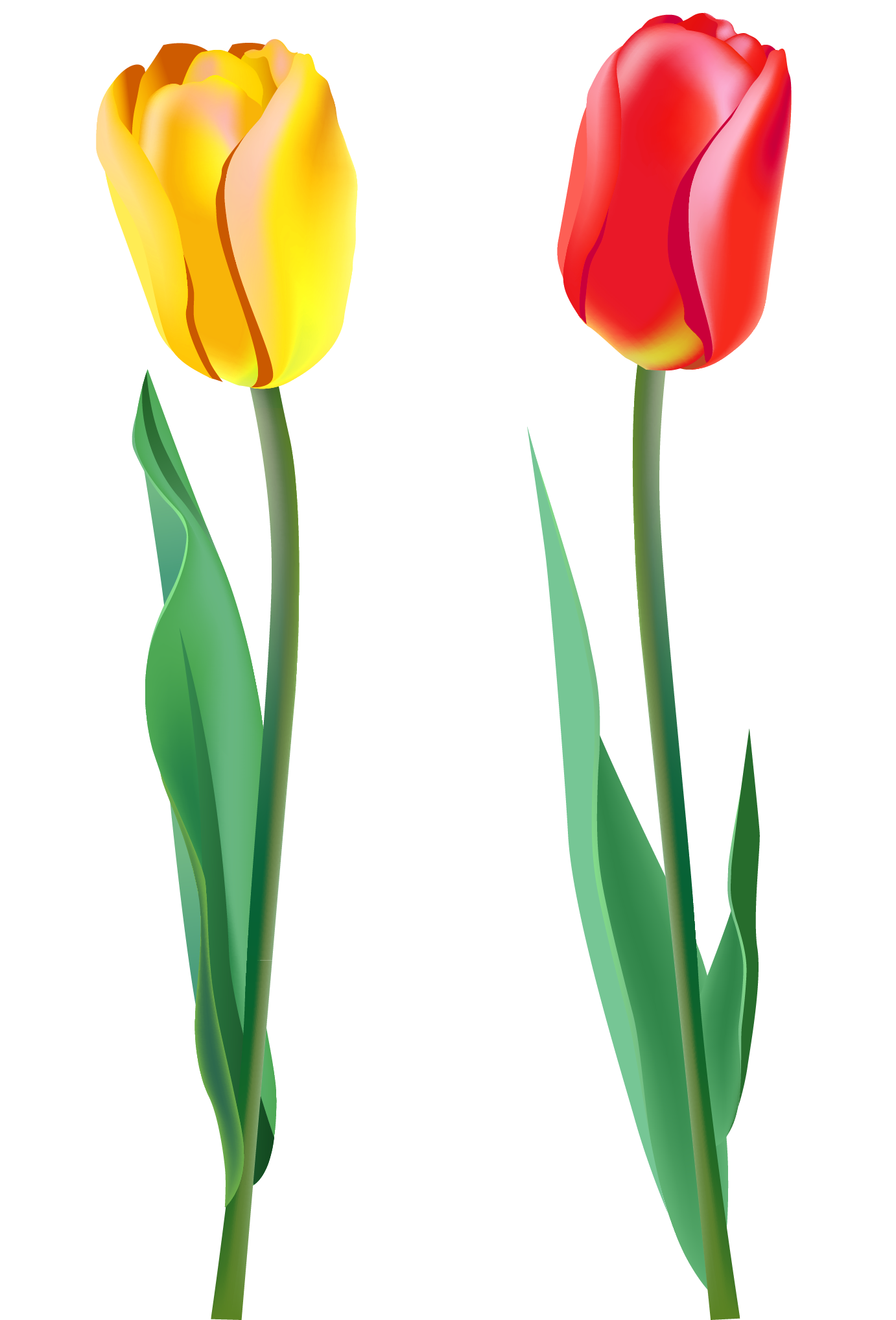 banner free stock Spring png gallery yopriceville. Tulips clipart.