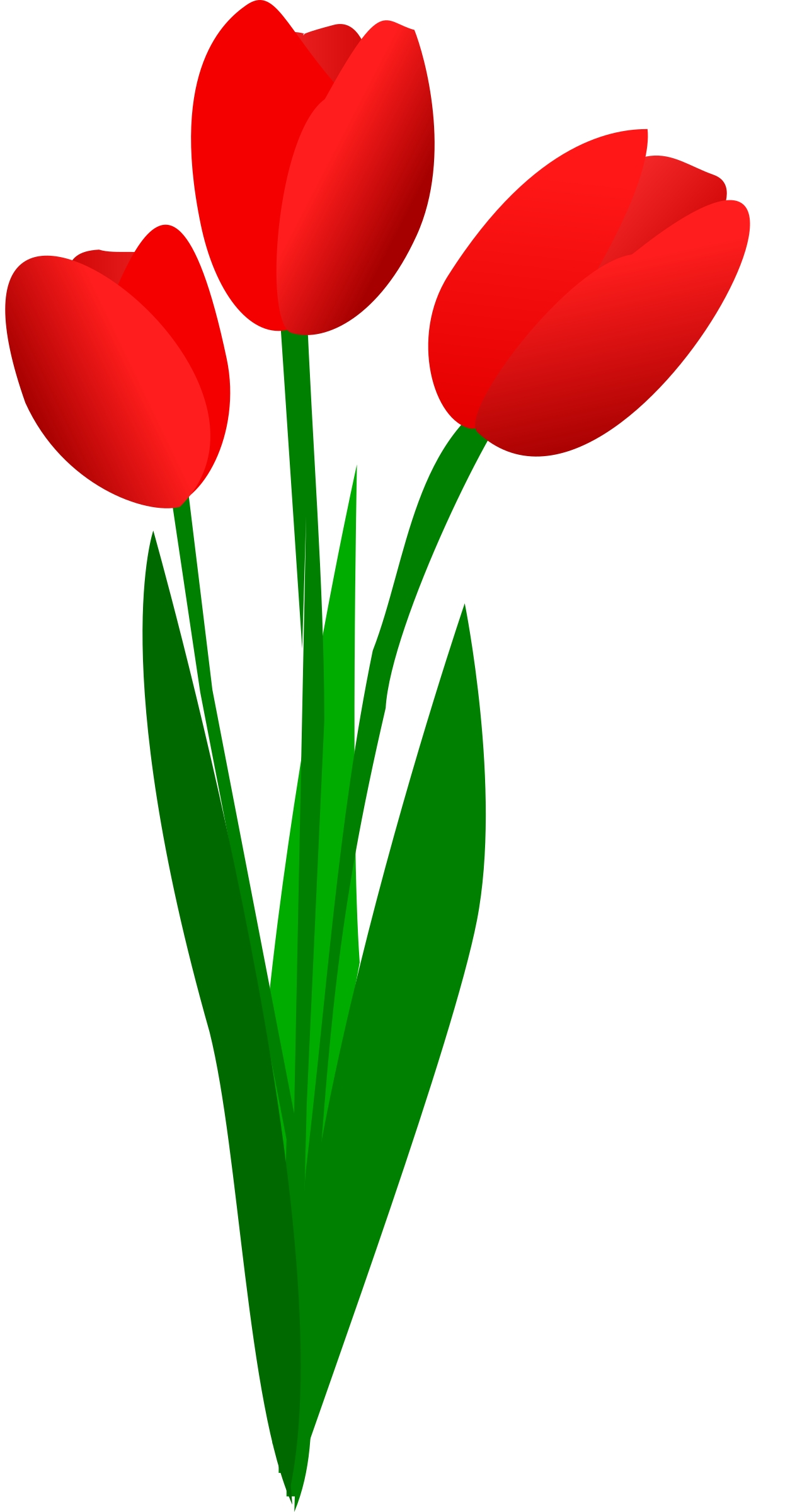 vector freeuse library Tulips clipart. Three red big image.