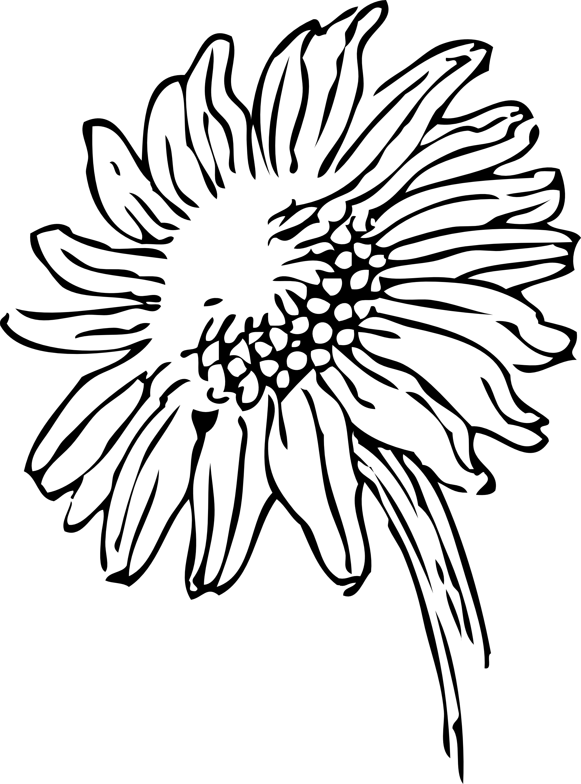 png free download Daisy Drawing Tumblr at GetDrawings
