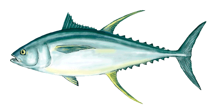 picture free Tuna clipart. Ahi png peoplepng com