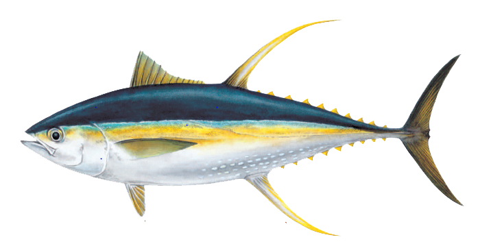 clip art royalty free stock Ahi Tuna PNG Pic