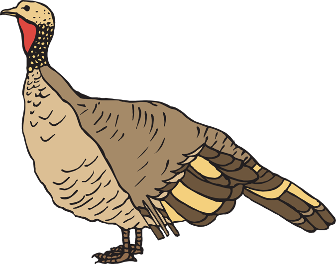 vector royalty free library Wild Turkey Clip Art