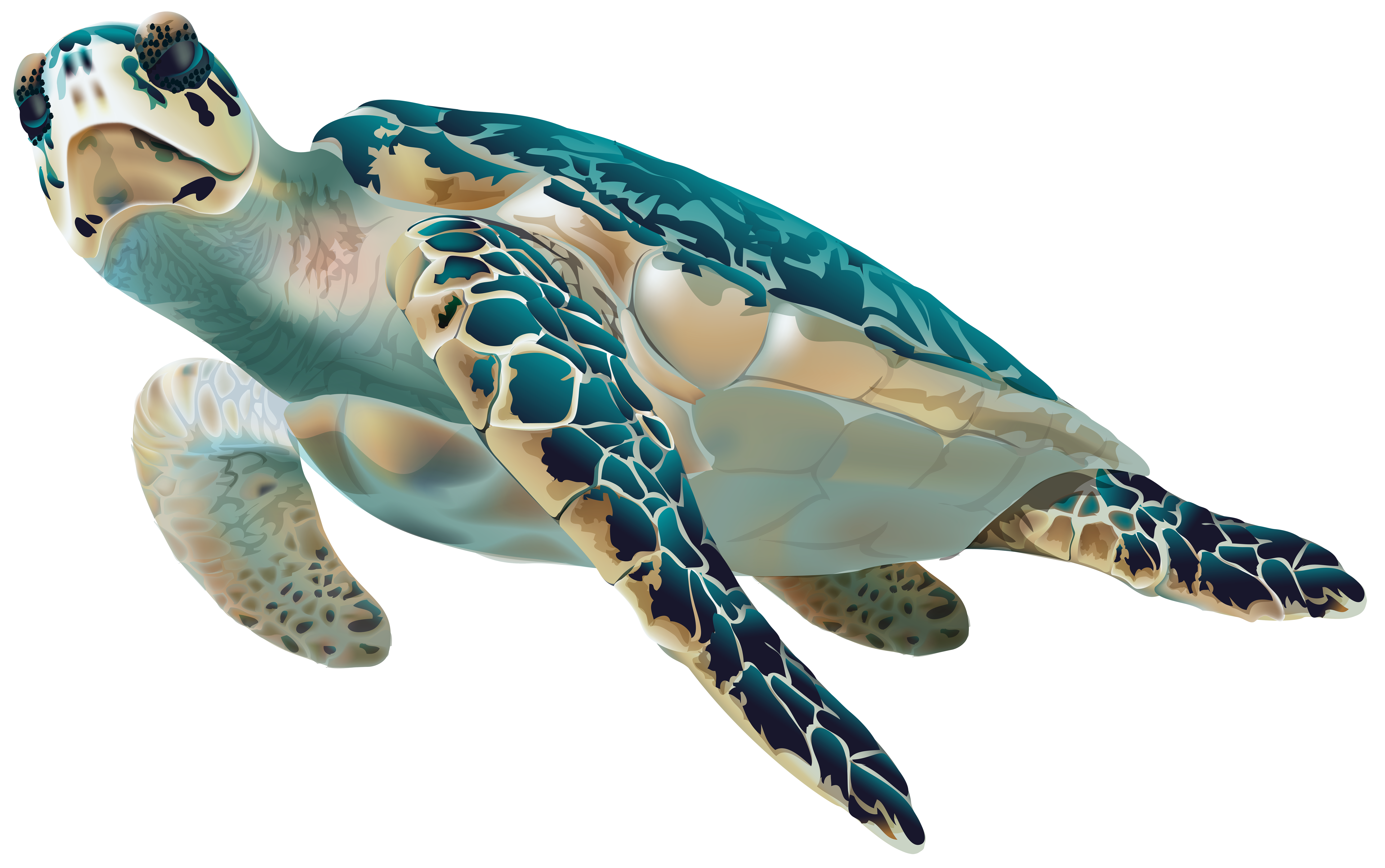 vector royalty free stock Baby sea turtle clipart. Png transparent clip art