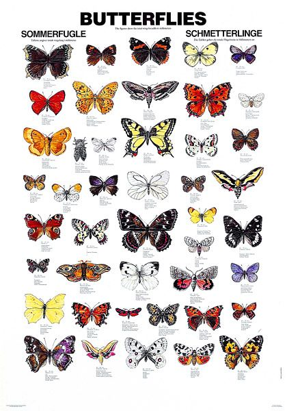 picture royalty free stock Types drawing colourful butterfly. Pin on fur feathers