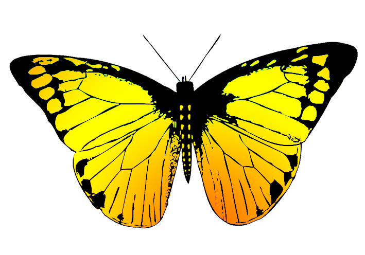 image freeuse library Types drawing colourful butterfly.  collection of butterflies