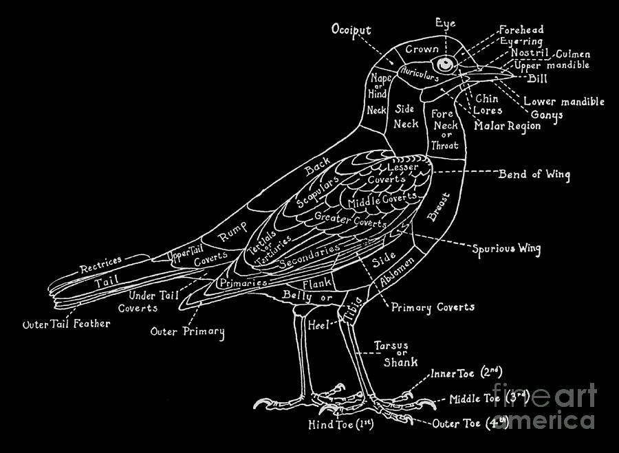 graphic freeuse Typography drawing bird. By modern art