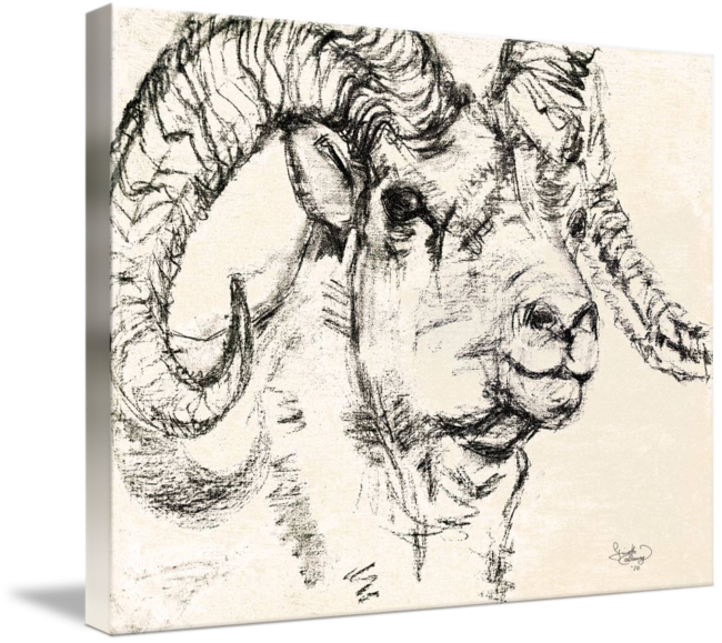 png freeuse library Charcoal sketch Dall Sheep Ram by Ginette Callaway