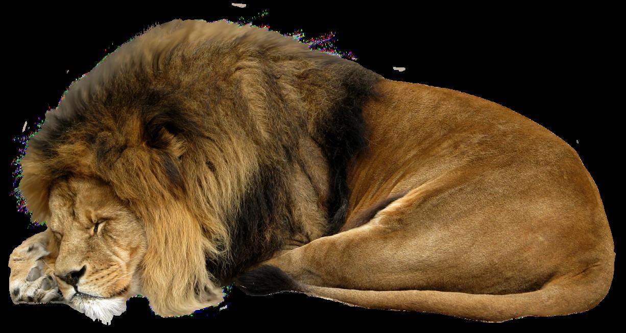png royalty free library Animal fur png images. Ushanka transparent clip art