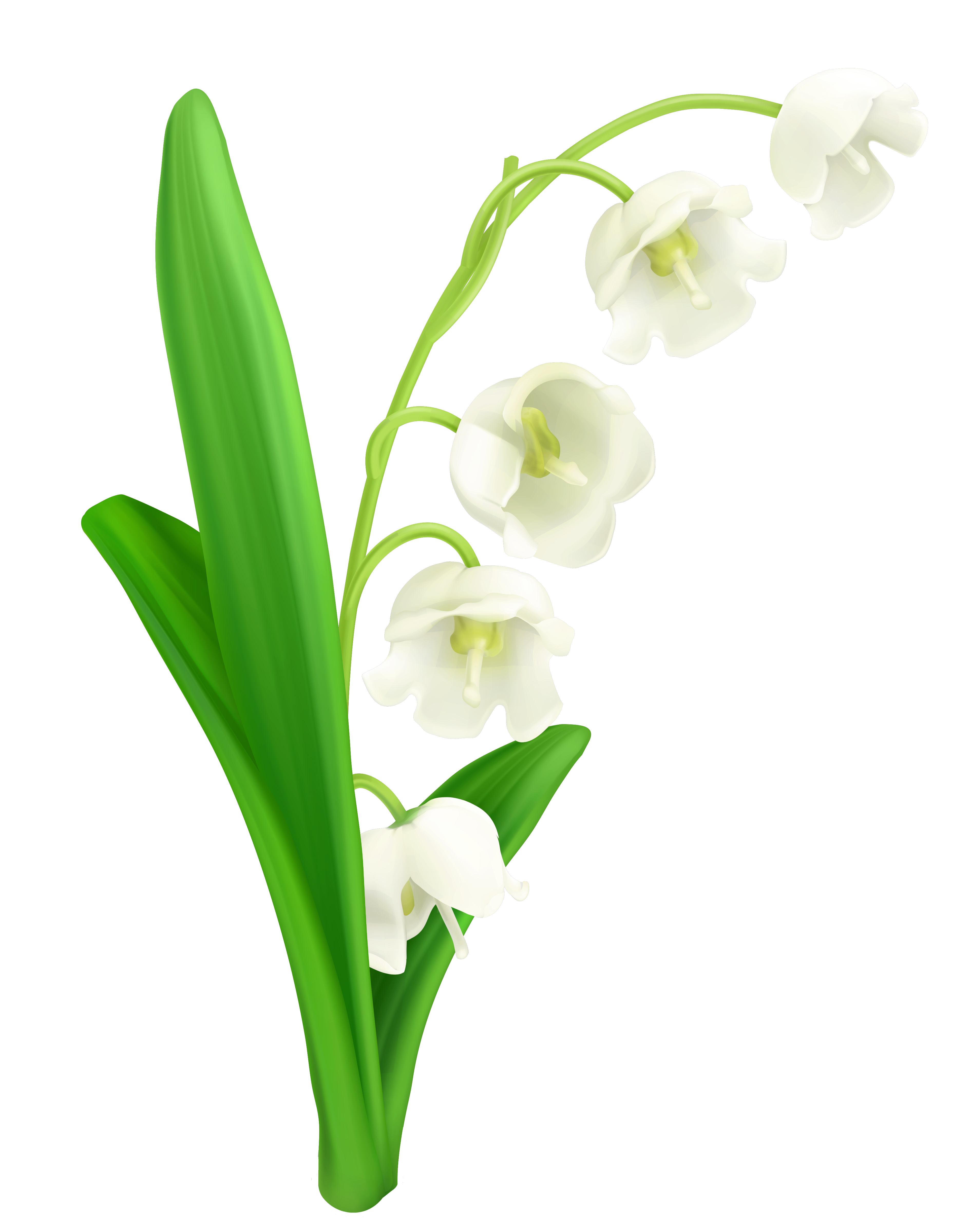 svg transparent download Valley clipart. Lily of the png