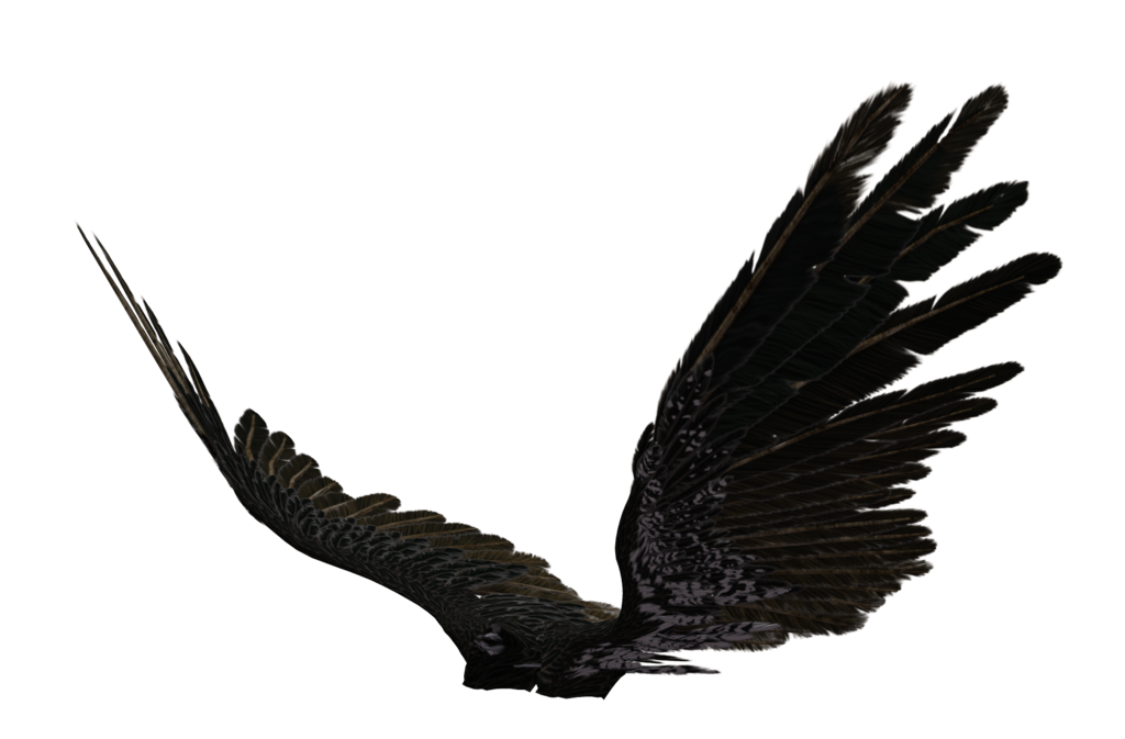 graphic Vector angel side. Black wings transparent images
