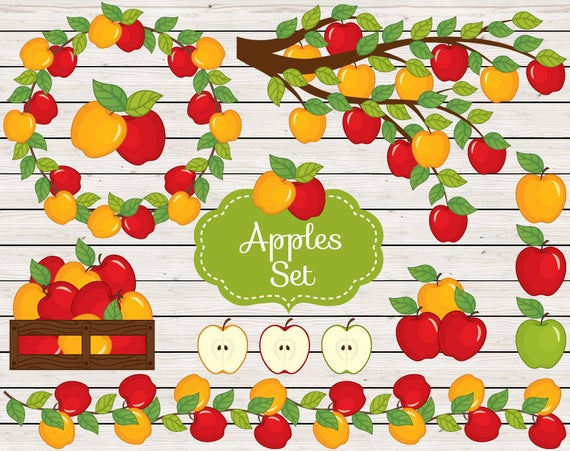 clipart free library Vector apples real. Clipart apple rustic harvest