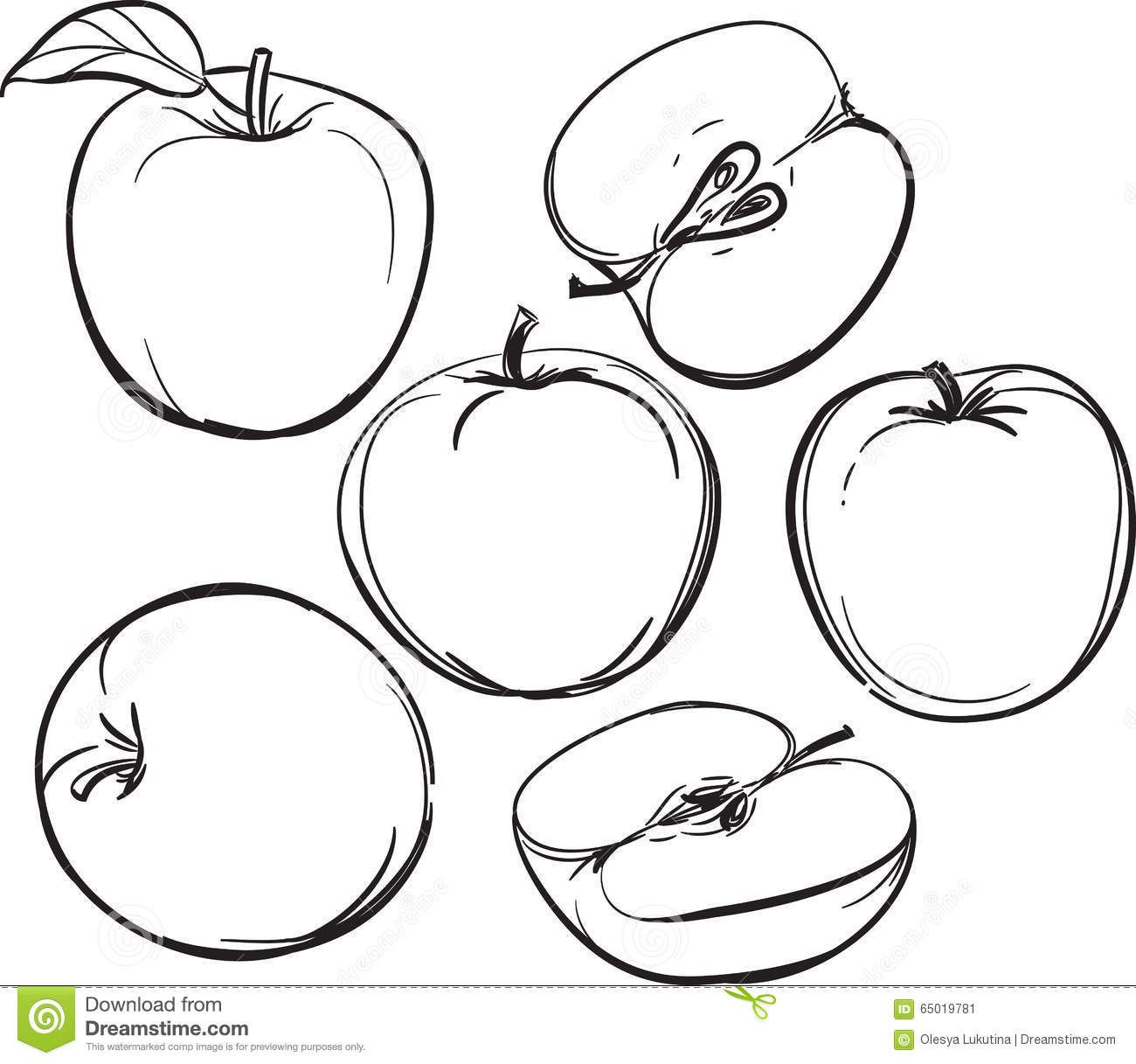 picture black and white library Apple line drawing of. Vector apples simple