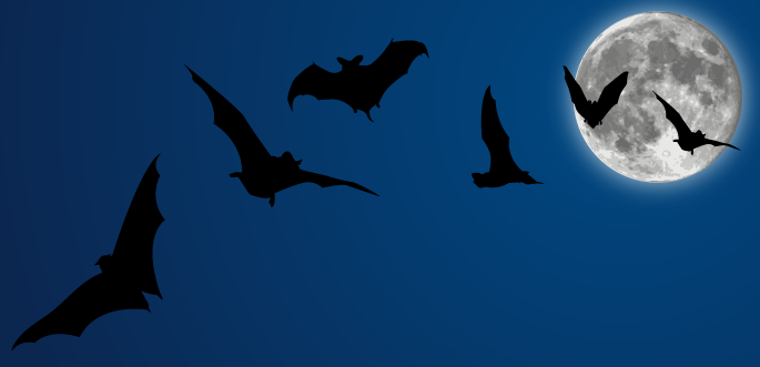 transparent download Halloween Vectors