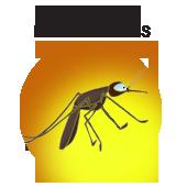clip royalty free download National borne control programme. Vector born disease