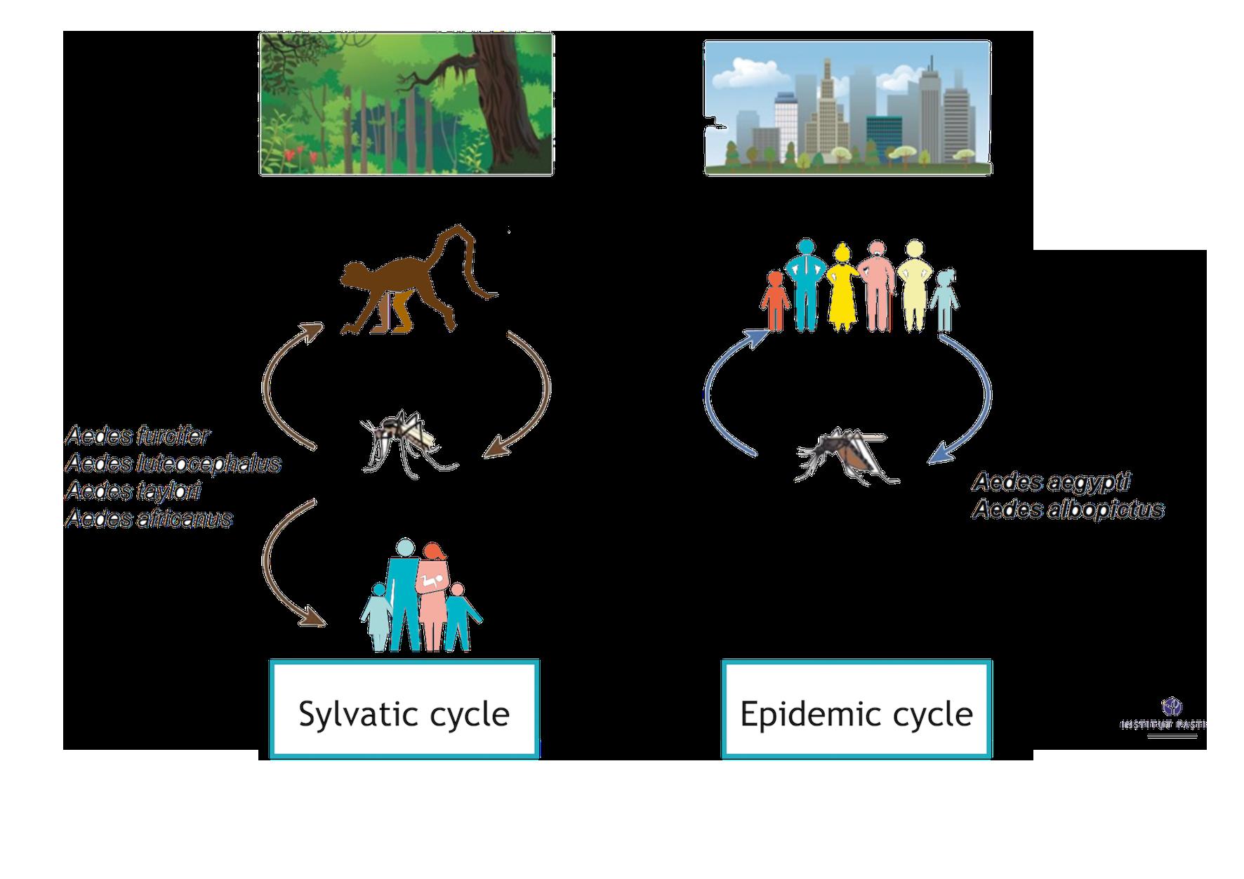 clipart black and white stock Team pasteur paris context. Vector born disease cycle