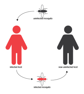 image royalty free library Vector born transmission. Borne diseases directions in