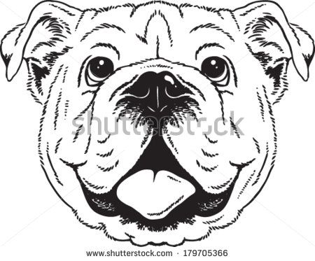 picture freeuse download Sketch of an english. Vector bulldog black and white