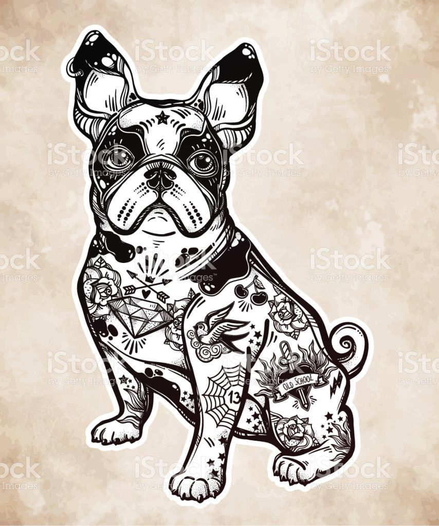 banner library library Vintage style beautiful or. Vector bulldog body