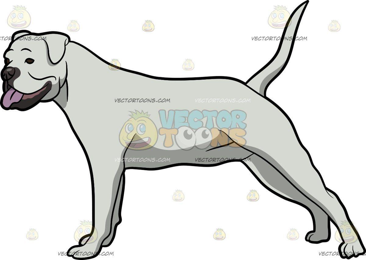 clip art transparent Vector bulldog body. An american stretching its
