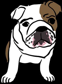 graphic black and white library Vector bulldog bull dog. Editor s choice graphics
