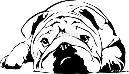 clipart transparent stock Stock image and royalty. Vector bulldog english