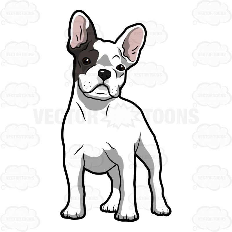 graphic free stock Vector bulldog frenchie. Cartoon white french puppy