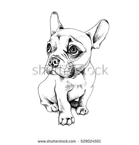clipart transparent download French puppy black and. Vector bulldog frenchie