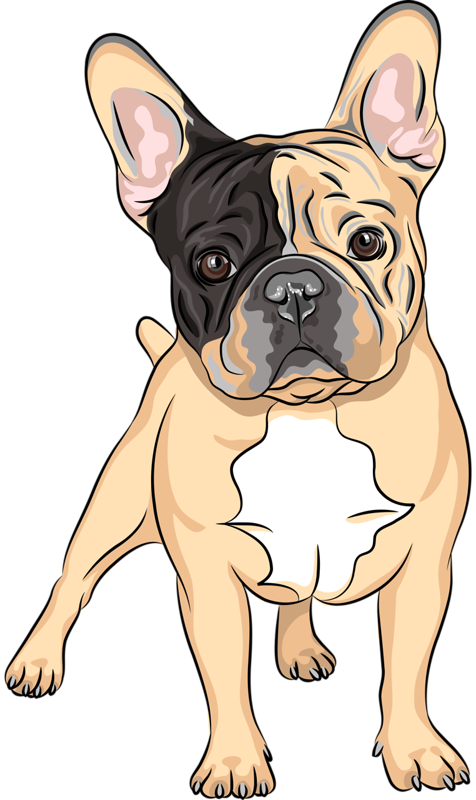 graphic royalty free download Vector bulldog frenchie. Content png pinterest album