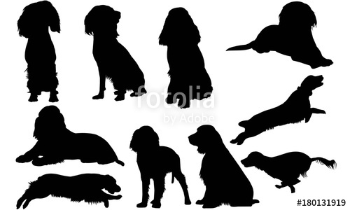 picture royalty free download English silhouette graphics stock. Vector bulldog springer spaniel