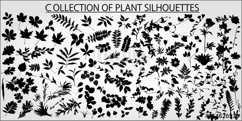 clip art black and white stock Collection of plants leaves. Vector bushes black and white