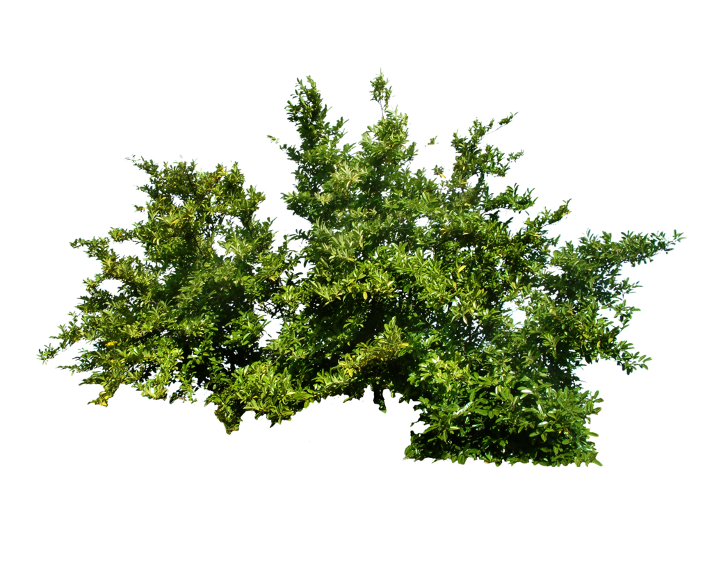clipart black and white library Shrub png transparent images. Vector bushes boxwood.