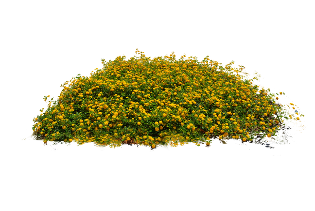 clip library stock vector bushes bush plant #117914927
