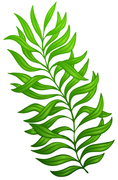 stock Exotic green plant png. Vector bushes clipart