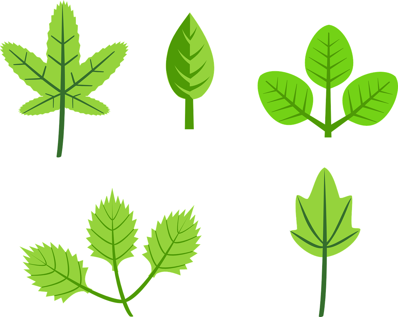 clipart Park leaf tree green. Vector bushes flat design