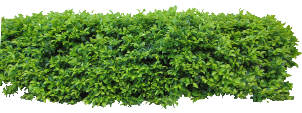 image freeuse stock  bush png for. Vector bushes hedge
