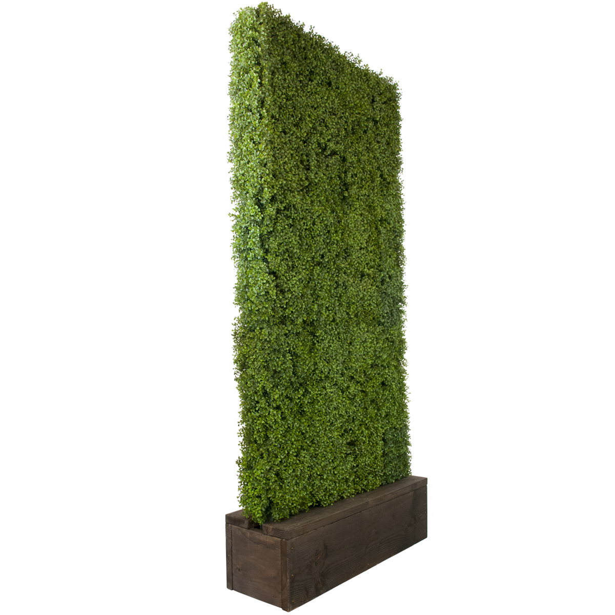 clip royalty free Boxwood hedge shrubs artificial. Vector bushes rectangle