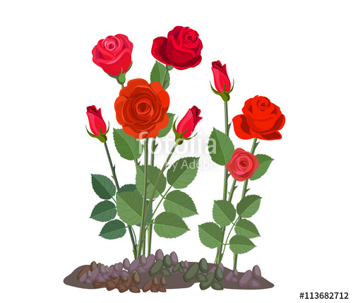 clip library download Vector bushes roses. Flowers growing in the