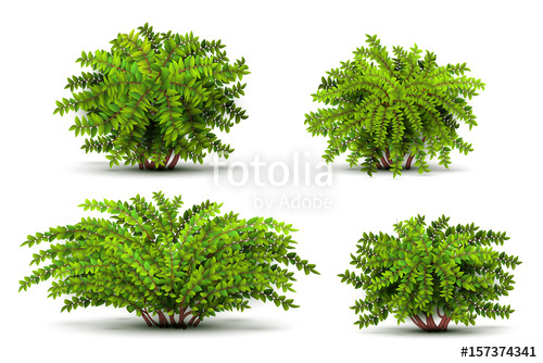 banner royalty free stock Vector bushes shrub. Shrubbery d isometric isolated