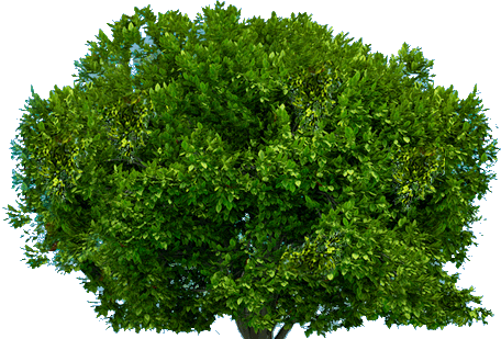 jpg royalty free library Tree transparent png pictures. Vector bushes top view