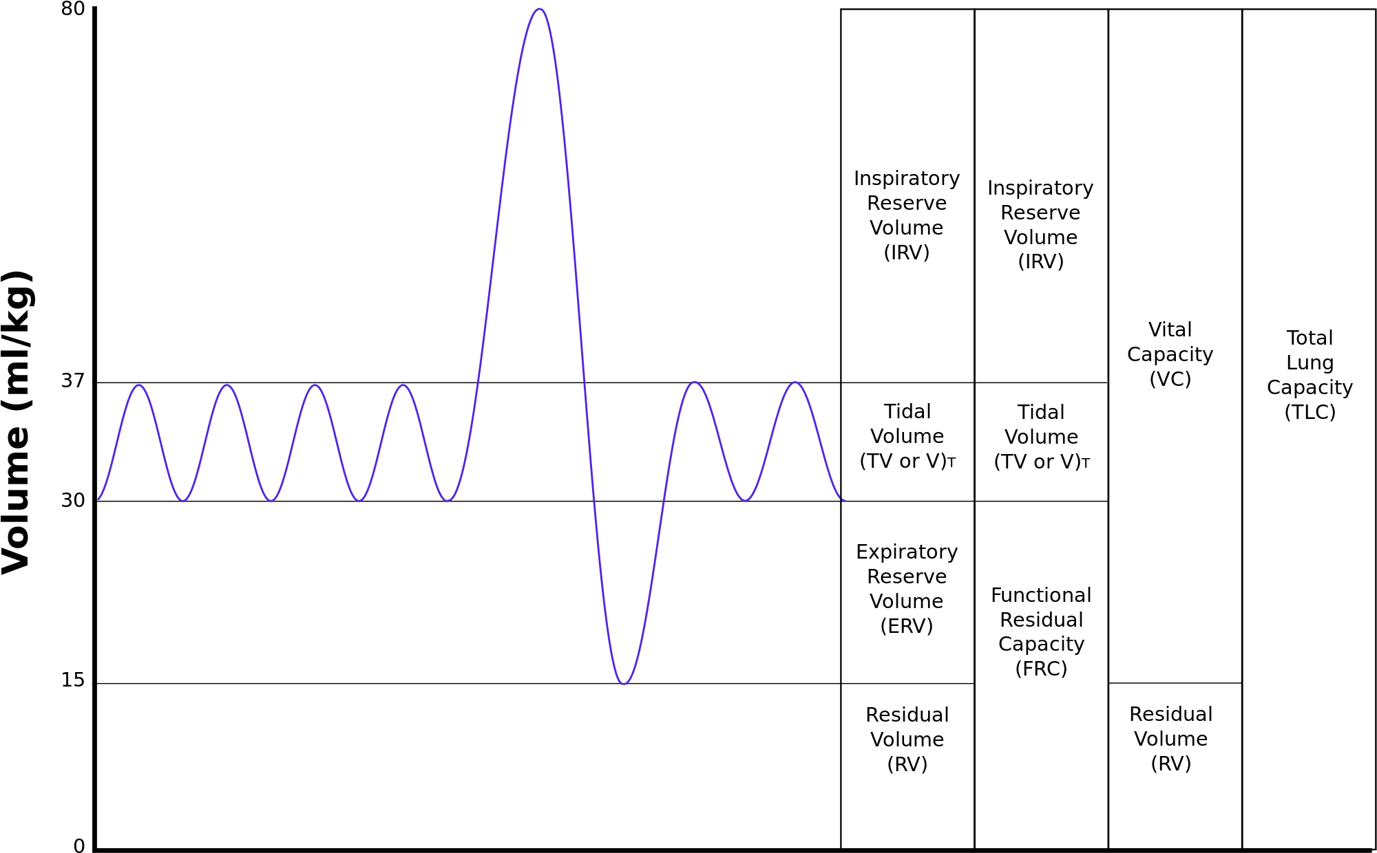 jpg download File lungvolumes svg wikimedia. Vector capacity lung