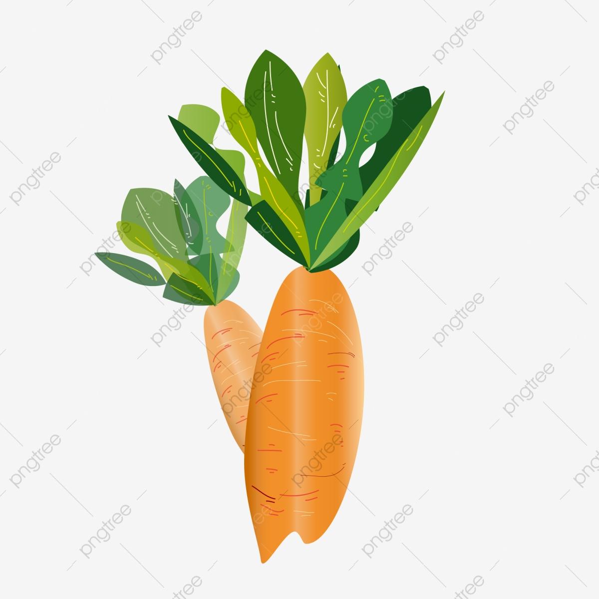 clip library library Orange illustration vegetables food. Vector carrot green vegetable