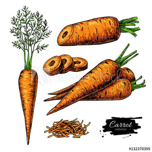 transparent library Illustration set isolated . Vector carrot hand drawn