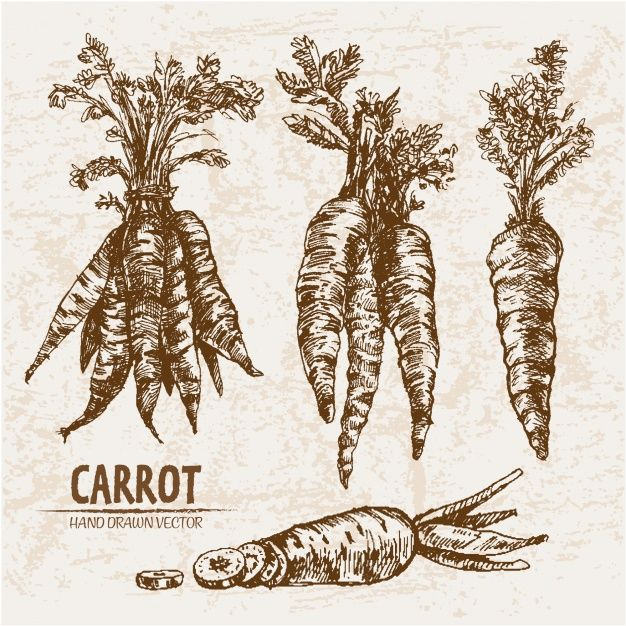 banner freeuse Vector carrot hand drawn. Collection free apapachos in
