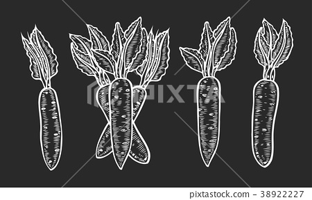 banner black and white download Illustration set stock . Vector carrot hand drawn