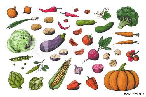 clipart library download Vector carrot veg. Hand drawn colored vegetables