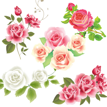 svg royalty free stock White png vectors psd. Vector coffee rose